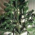 festival tag christmas tree Other Collectable