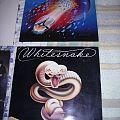 Mötley Crüe - Tape / Vinyl / CD / Recording etc - Non Metal Vinyls