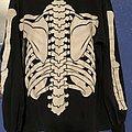 Misfits - TShirt or Longsleeve - Misfits Glow in the dark skeleton 1997 post Glenn D.
