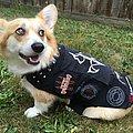 Rotting Christ - Battle Jacket - Metal corgi in her little battle vest