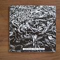 Death Toll 80k - Abolish Fur Farms Split Tape / Vinyl / CD / Recording etc