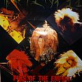 """Other Collectable - Rosenfeld """"Pigs of the Empire"""" poster"""