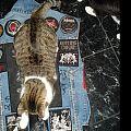 Slayer - Battle Jacket - Marduk vest