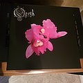Opeth: Orchid colored vinyl Tape / Vinyl / CD / Recording etc
