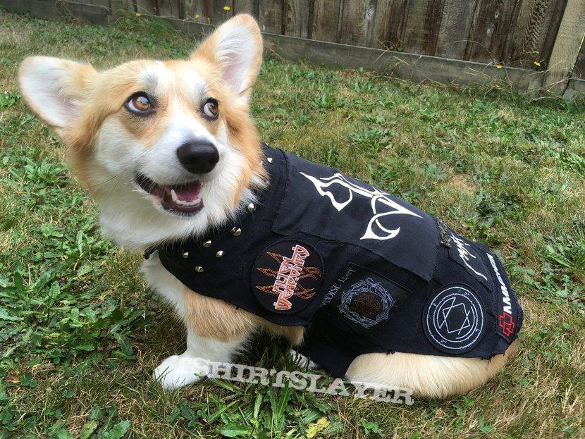 Metal corgi in her little battle vest